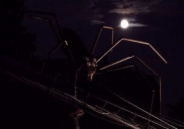 Spider full moon